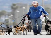 Lady walking several dogs