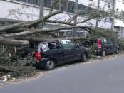 Trees fallen smashing cars