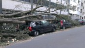 Trees fallen smashing cars